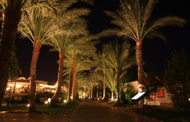 фотографии Dessole Seti Sharm Resort изображение №24