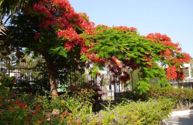 фотографии отеля Sunsuites Carolina изображение №15