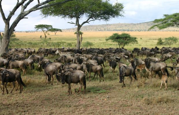 фото Serengeti Serena Safari Lodge изображение №2