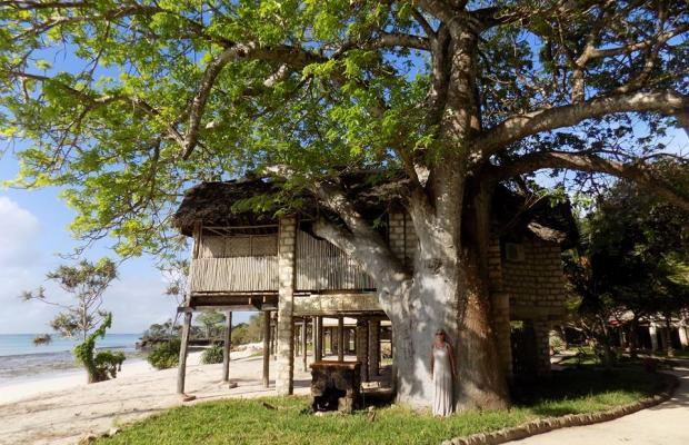 фотографии The Cove Treehouses (ex. The Cove Retreat) изображение №4