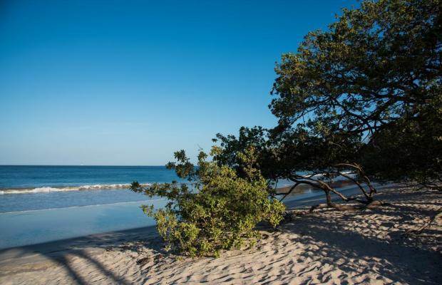 фото Flamingo Beach Resort изображение №14