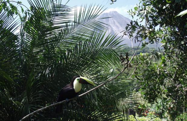 фотографии отеля Tabacon Resort изображение №11