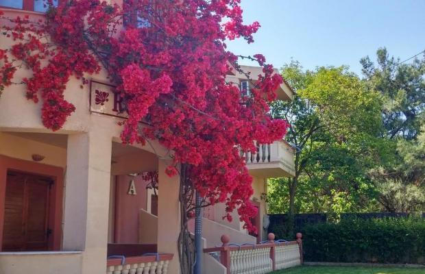 фотографии отеля Castella Beach изображение №3