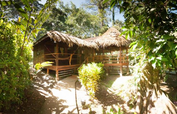 фото отеля Cariblue Beach and Jungle Resort изображение №53