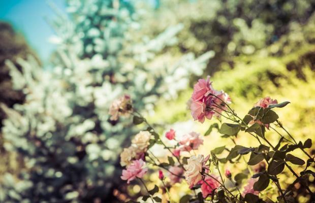 фотографии Finca Los Llanos Capileira изображение №12
