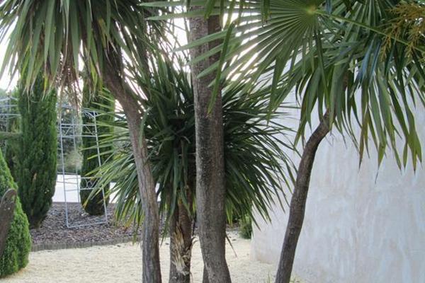 фото отеля Villa Nazules Hipica Spa изображение №17