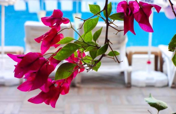 фото Grand Viking Hotel изображение №10