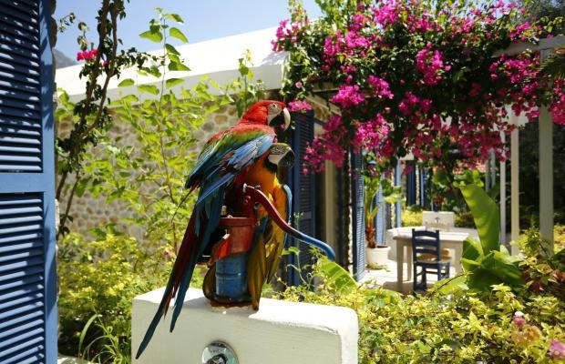 фотографии отеля Flamingo изображение №15