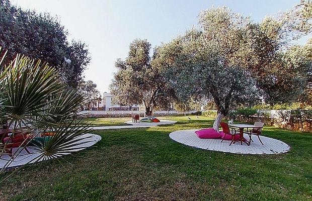 фото отеля Club Alisya Beach Hotel изображение №13