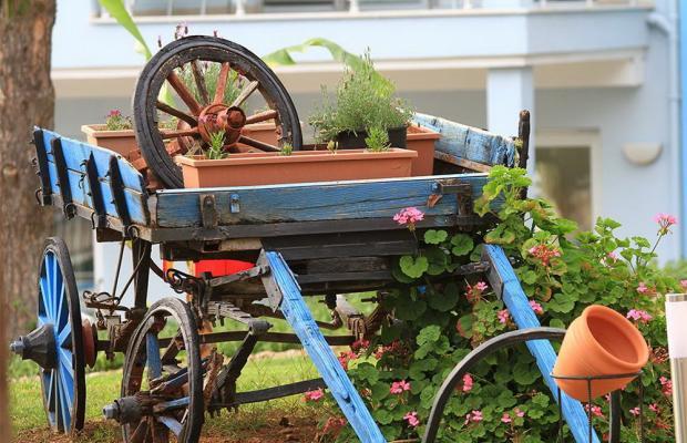 фото Daisy Garden Resort (ex. Violet Hotel; Big Rose) изображение №18
