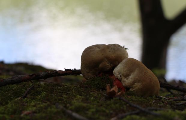 фото Дубовая роща (Dubovaya roscha) изображение №14