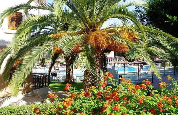 фото Albir Garden Resort изображение №14