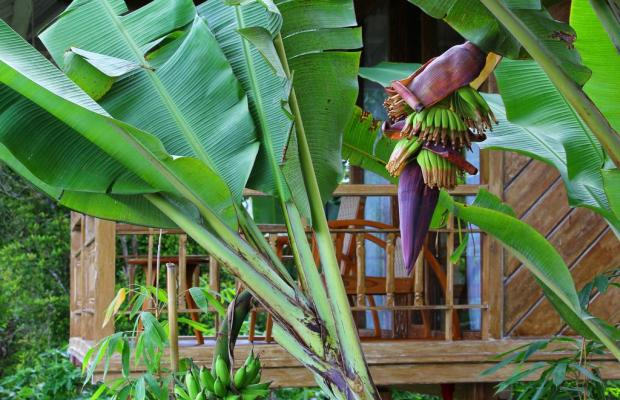 фотографии отеля Melanting Cottages изображение №7