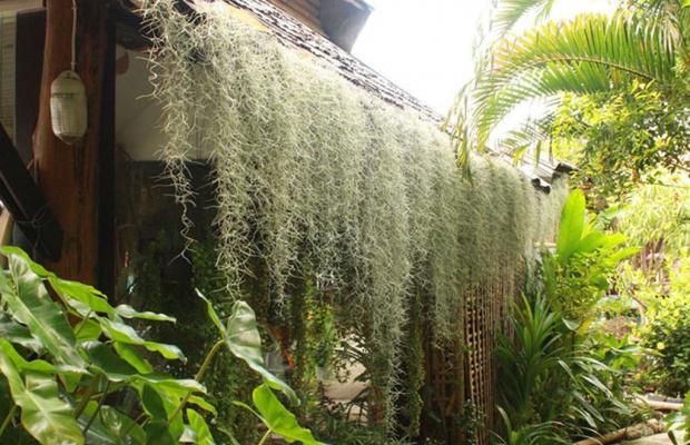 фотографии Bamboo Village изображение №20