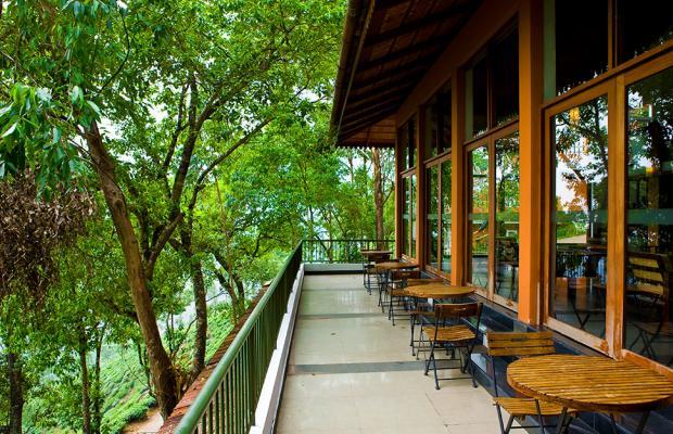фото Tea Valley изображение №58