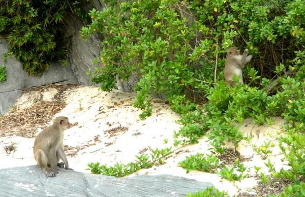 фотографии отеля Monkey Island Resort изображение №23