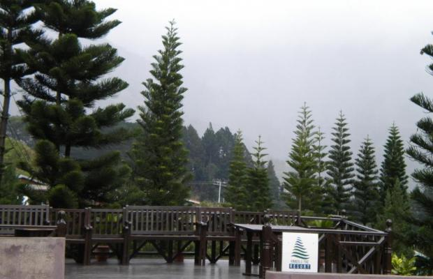фотографии Kinabalu Pine Resort изображение №20