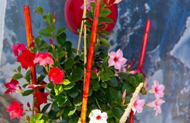 фотографии отеля Berghof Graml изображение №7
