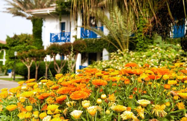 фотографии отеля Belconti Resort изображение №11