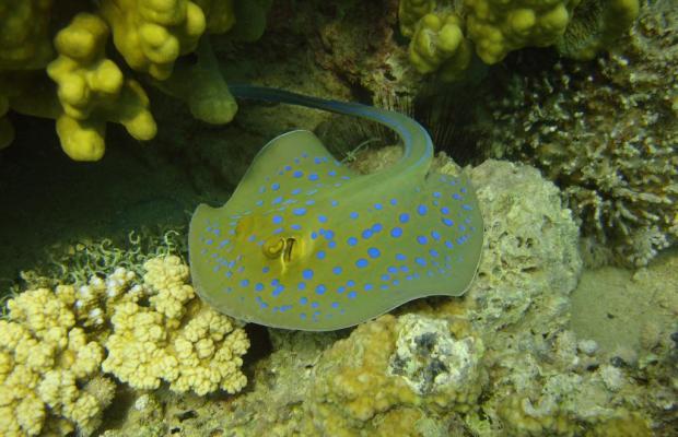 фотографии отеля Red Sea Dive Center изображение №11